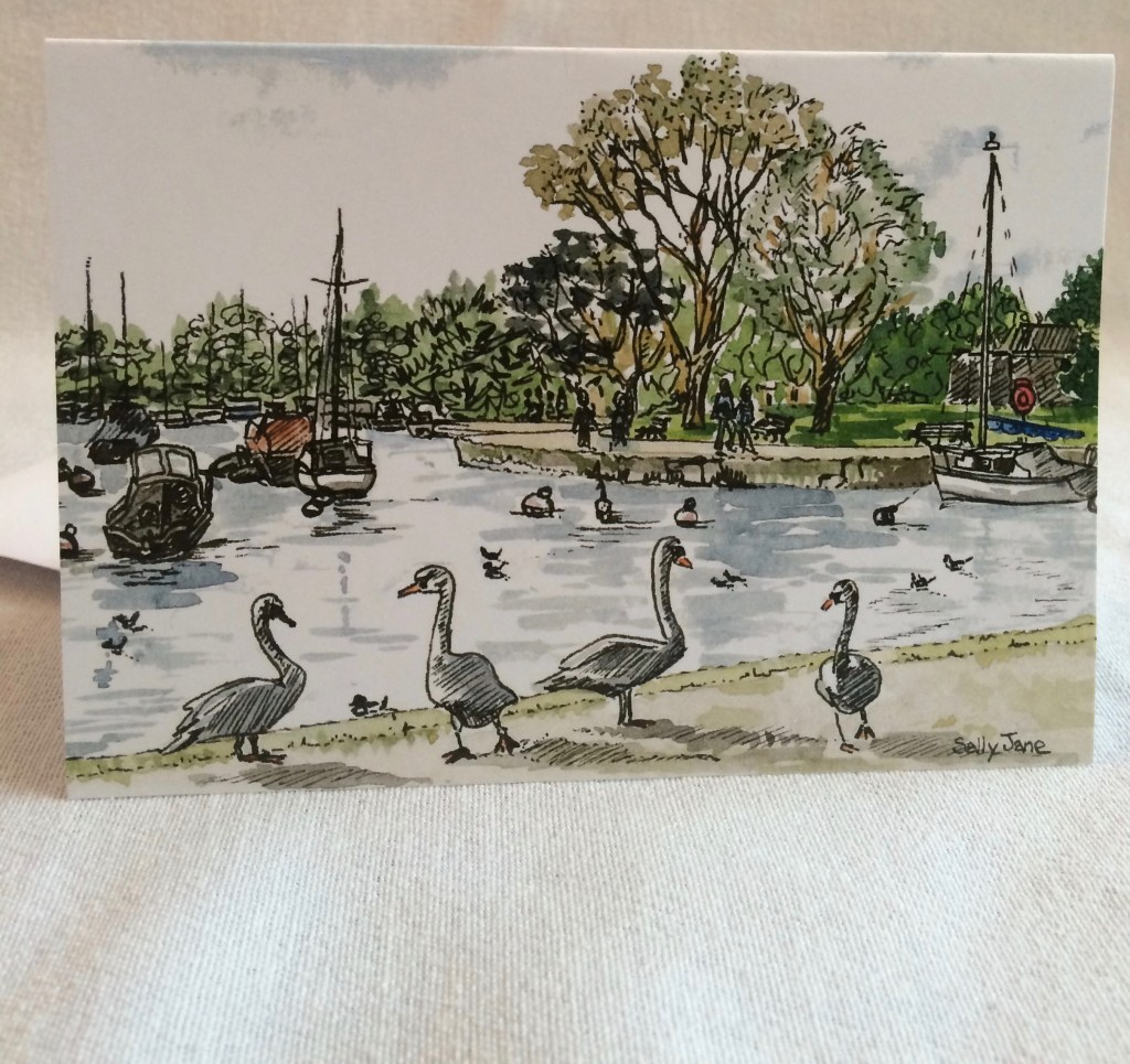 The swans at Christchurch